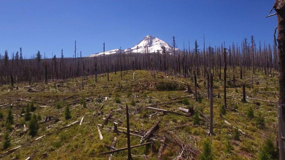 Forest Fire Scars & Cloud Cap Inn